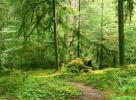 Gray Wolf River Trail, Olympic National Park