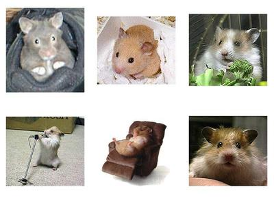 Hamster Collage